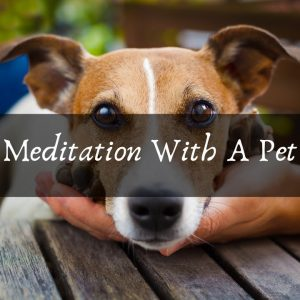 Meditation With A Pet