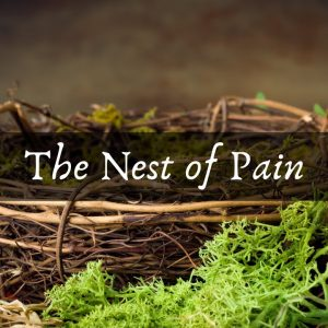 The Nest of Pain